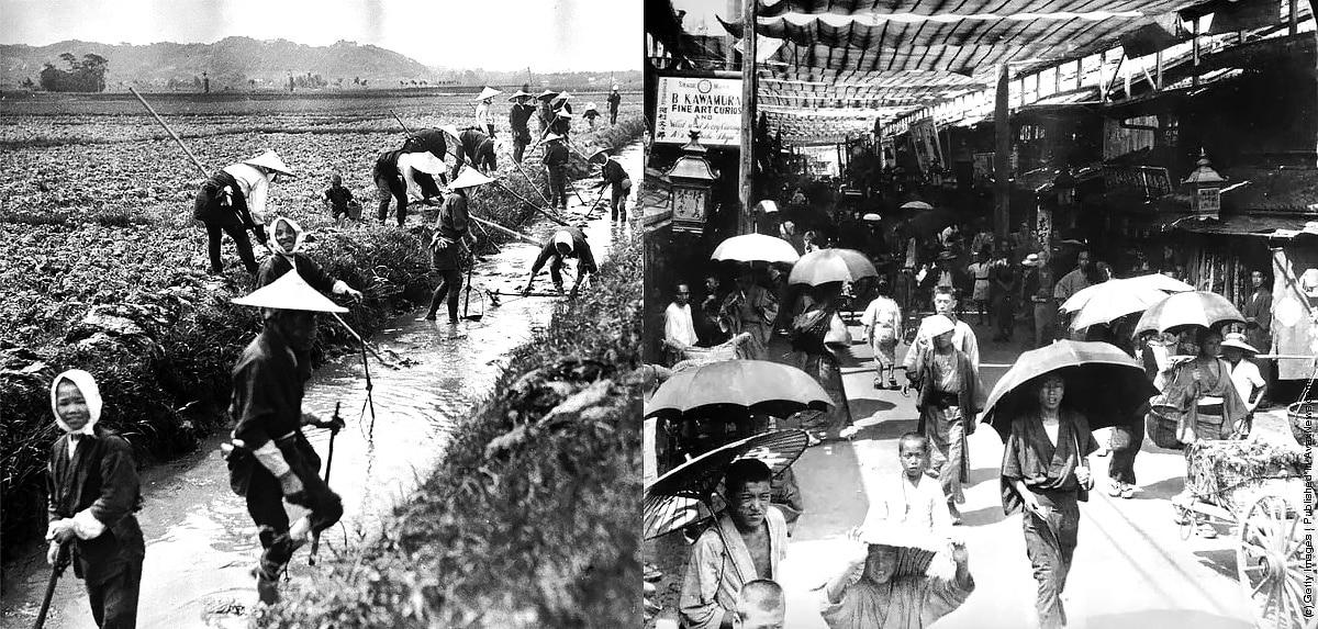 Japan Parasol Rice Field Work
