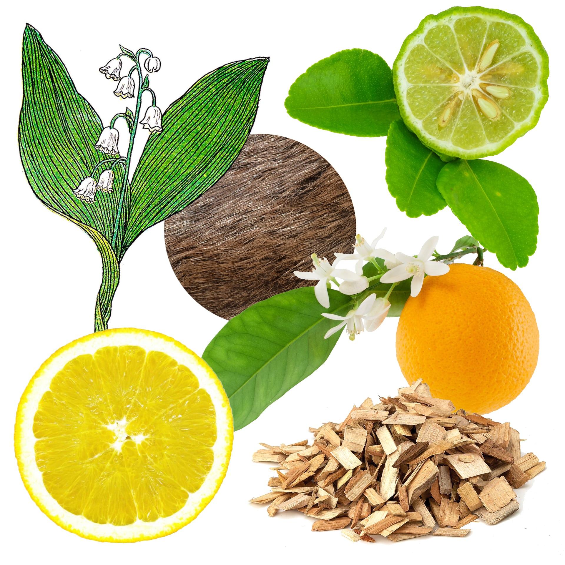 aqua universalis ingredients